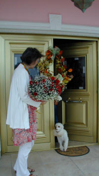 Delivering flowers in Cyprus can be hair raising, beware of the cute dogs